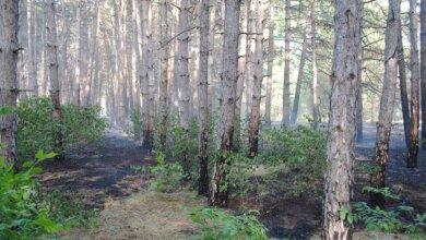 Кілька днів поспіль горів Балабанівський ліс. Бережіть екосистеми від пожеж! | Корабелов.ИНФО image 1