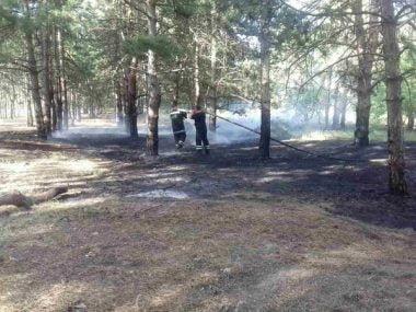 Причина займання - підпал. Рятувальники гасили вогонь площею понад 2 га у Балабанівському та Лиманівському лісах | Корабелов.ИНФО image 3