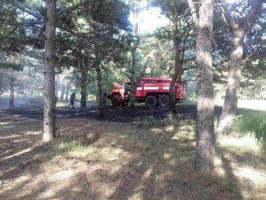 Причина займання - підпал. Рятувальники гасили вогонь площею понад 2 га у Балабанівському та Лиманівському лісах | Корабелов.ИНФО image 2