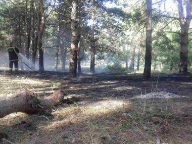 Причина займання - підпал. Рятувальники гасили вогонь площею понад 2 га у Балабанівському та Лиманівському лісах | Корабелов.ИНФО image 1