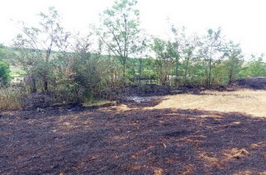 13 випадків пожеж сухої трави сталося лише за добу на Миколаївщині. Горіло і в Корабельному районі міста   Корабелов.ИНФО