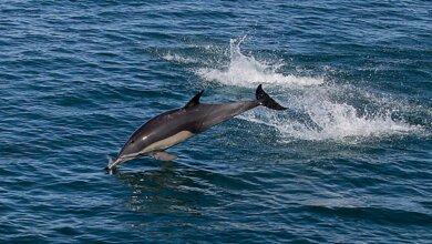 «Не преграждать пути отхода». Как себя вести, когда в пресную воду заплывает дельфин | Корабелов.ИНФО image 3
