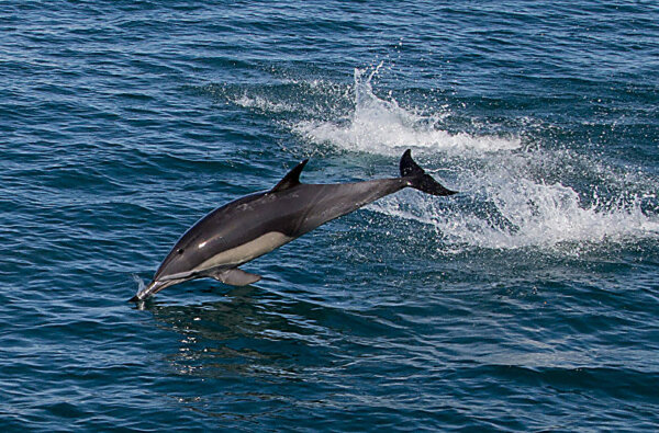 «Не преграждать пути отхода». Как себя вести, когда в пресную воду заплывает дельфин   Корабелов.ИНФО image 3