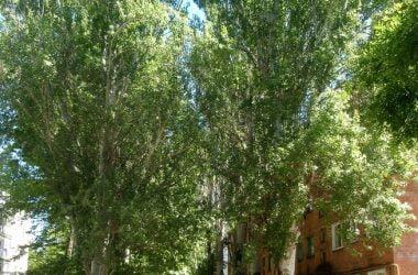 Кульбакино: многоэтажная окраина, а не хутор (история микрорайона) | Корабелов.ИНФО image 9