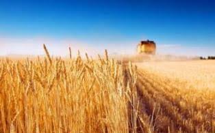 У Миколаївській області завершили жнива. Вітовські аграрії зібрали 182 тис. тонн зерна | Корабелов.ИНФО