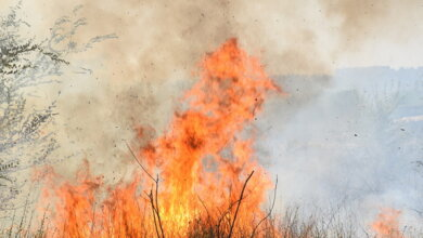 В Корабельному та Інгульському районах сталися масштабні пожежі сухої трави | Корабелов.ИНФО image 1