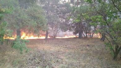 В Галицинове сталася масштабна пожежа на відкритій території, зачепило і ліс | Корабелов.ИНФО image 1