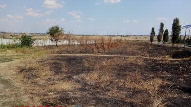 Уничтожена аллея тополей, недавно высаженных в Корабельном районе | Корабелов.ИНФО image 3