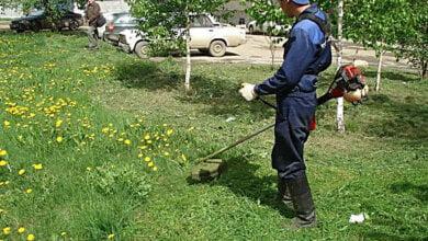 Сомнительная донецкая фирма выиграла тендер на уборку газонов в Корабельном районе Николаева за 360 тыс. грн. | Корабелов.ИНФО