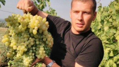Зафіксовано у Національному реєстрі рекордів: миколаєвець виростив грону винограду вагою близько 7 кг | Корабелов.ИНФО