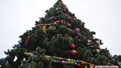 Новогодняя елка на главной площади Николаева обойдется в 3 млн гривен   Корабелов.ИНФО