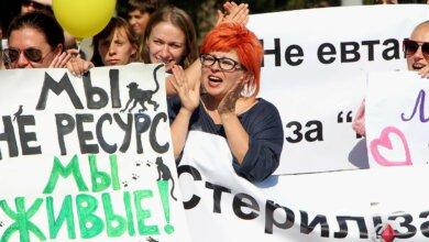 «Нет зоофашистам» - в Николаеве митинговали против усыпления бездомных собак   Корабелов.ИНФО image 5