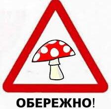 """""""Отруйні гриби дуже небезпечні"""", - рятувальники Корабельного райвідділу попереджають про небезпеку   Корабелов.ИНФО image 1"""