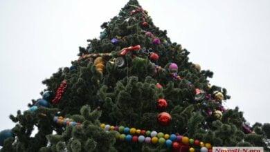 Горсовет Николаева купил у одесских предпринимателей новогоднюю елку почти за 3 миллиона гривен   Корабелов.ИНФО
