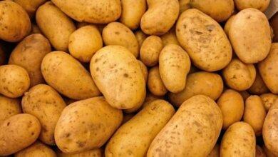Картопля в Україні подешевшала на чверть | Корабелов.ИНФО