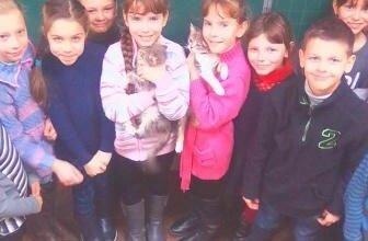 Гуманному ставленню до тварин вчили дітей, які принесли до школи в Корабельному районі своїх домашніх улюбленців | Корабелов.ИНФО image 1