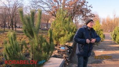 От местных лесных красавиц - до западных. Не везде законная торговля соснами в Корабельном районе Николаева | Корабелов.ИНФО image 3