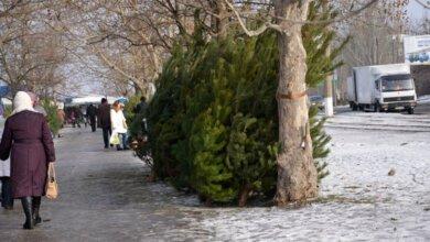 Исполком горсовета определил 15 мест официальной продажи новогодних елок и украшений в Корабельном районе | Корабелов.ИНФО image 1