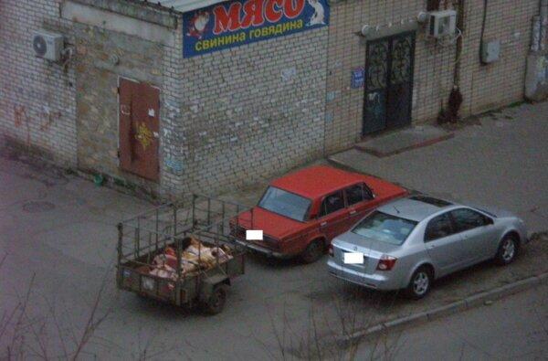 """""""После завтрака в мусорном контейнере сорока разгуливала по мясу для покупателей"""", - житель Корабельного района   Корабелов.ИНФО image 2"""