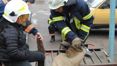 Ногу дівчинки затиснуло у металевій решітці лавки - миколаївські рятувальники визволяли її за допомогою різака | Корабелов.ИНФО image 1
