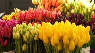 Photo of Только в некоторых местах Корабельного района Николаевская власть разрешила торговать цветами и сувенирами к 8 Марта