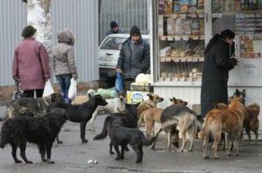 Собачья проблема: в горисполкоме признали, что стерилизация не помогает, и готовы идти на радикальные меры