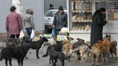 Собачья проблема: в горисполкоме признали, что стерилизация не помогает, и готовы идти на радикальные меры | Корабелов.ИНФО