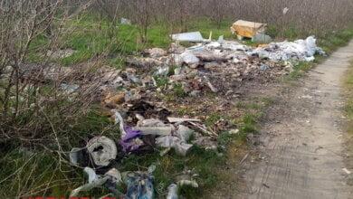 Балабановский лес завален кучами мусора | Корабелов.ИНФО image 2