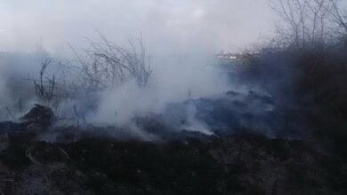 Ймовірно, навмисний підпал: площа пожежі в у Балабанівському лісі склала 1100 кв.м.   Корабелов.ИНФО