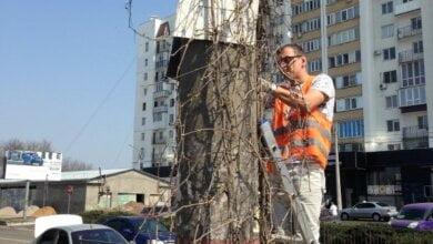 Продолжается борьба с несанкционированной рекламой на столбах в Корабельном районе | Корабелов.ИНФО image 1