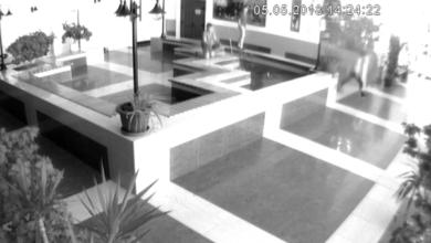 Подростки намеренно камнем убили японского карпа в спорткомплексе «Водолей» | Корабелов.ИНФО image 1