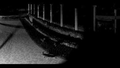 Свора бездомных собак пробралась в Николаевский зоопарк и загрызла четырех альпак   Корабелов.ИНФО image 4