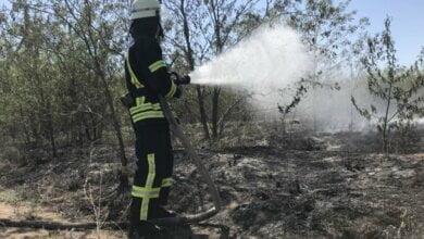 Из-за человеческой халатности снова горел Балабановский лес | Корабелов.ИНФО image 2