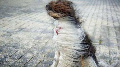 Photo of В Николаеве объявили штормовое предупреждение