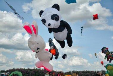 Дракон, панда и осел: на Николаевском фестивале в небо взмыли сотни удивительных змеев