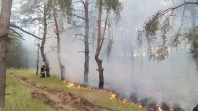 Photo of 400 кв. метров в огне: опять горел Балабановский лес