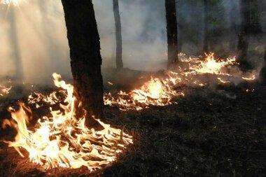 В Балабановском лесу из-за поджога горела хвойная подстилка