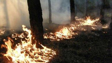 Photo of В Балабановском лесу из-за поджога горела хвойная подстилка