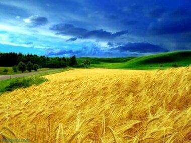 Европейский суд по правам человека признал мораторий на продажу земли в Украине нарушением прав человека