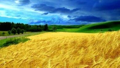 Европейский суд по правам человека признал мораторий на продажу земли в Украине нарушением прав человека | Корабелов.ИНФО