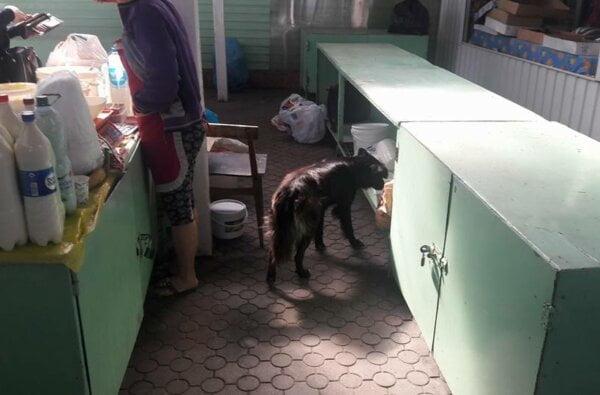 Ужасающая антисанитария на рынке в Корабельном: открытая молочка и бродячие собаки, облизывающие поддон (ВИДЕО) | Корабелов.ИНФО