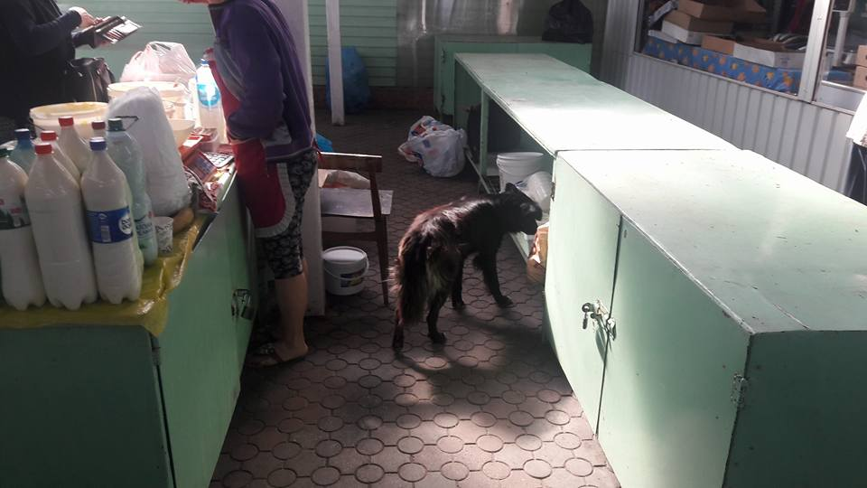Photo of Ужасающая антисанитария на рынке в Корабельном: открытая молочка и бродячие собаки, облизывающие поддон (ВИДЕО)