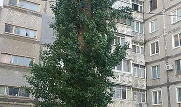 """""""Меня по новостям покажут!"""" Спасатели в Корабельном районе сняли с дерева мальчика на высоте пятого этажа (видео)   Корабелов.ИНФО"""