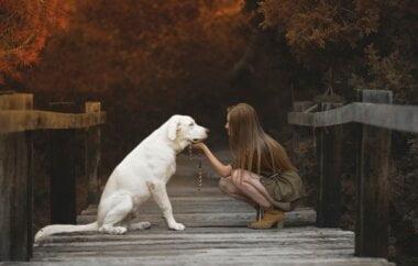 В Николаеве девушка упала в колодец, пытаясь спасти свою собаку