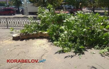 снос деревьев на пр. Корабелов