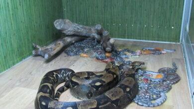 «Впервые за 20 лет»: В Николаевском зоопарке родились 26 маленьких удавов | Корабелов.ИНФО image 2