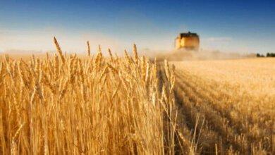 Аграрии Николаевской области собрали первый миллион тонн зерновых | Корабелов.ИНФО