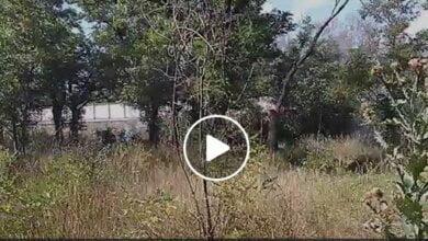 В центре Корабельного района горела лесопосадка (видео) | Корабелов.ИНФО