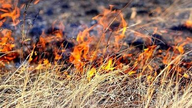«Заодно сгорели «Mazda» и хозпостройка», – житель Витовского района на Николаевщине неудачно сжег сухую траву возле своего дома | Корабелов.ИНФО