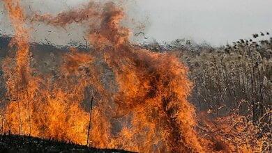 В Николаевской области установили пятый класс пожарной опасности | Корабелов.ИНФО